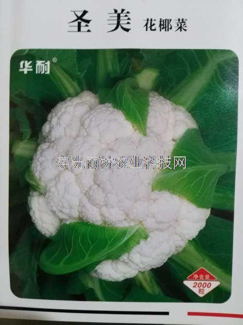 进口花椰菜种子-进口白花菜种子-圣美白花菜种子
