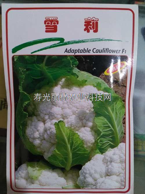 进口白花菜种子-雪莉白花菜种子-进口花椰菜品种