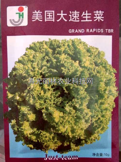 美国大速生菜种子-进口生菜种子