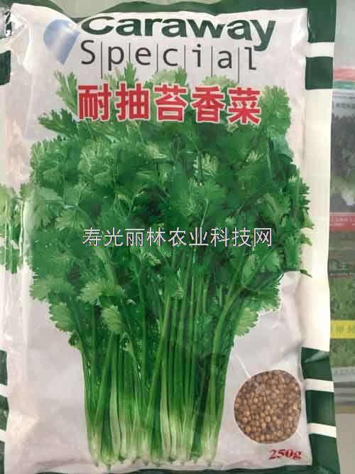 耐抽苔香菜种子