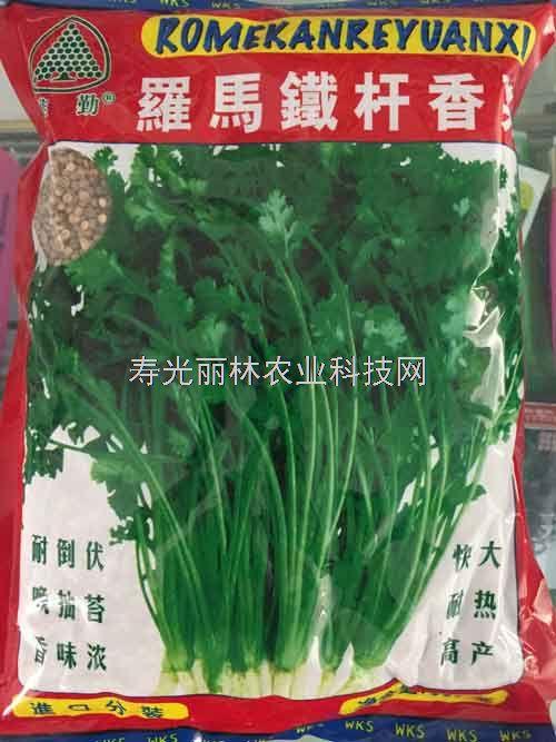 意大利进口香菜种子-耐热香菜种子-罗马铁杆香菜种子
