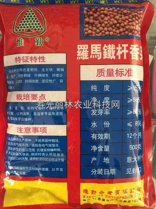 耐热香菜种子