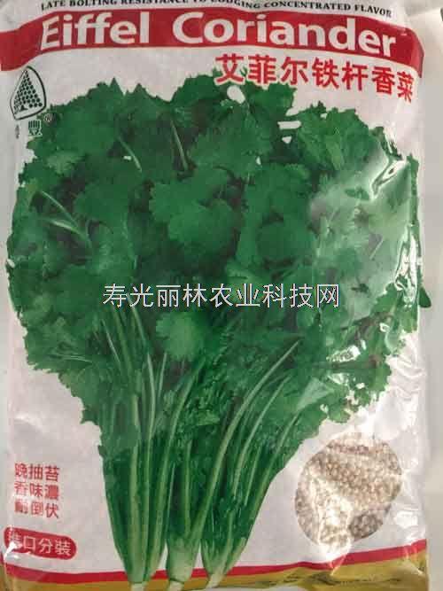 艾菲尔铁杆香菜种子-耐热香菜种子