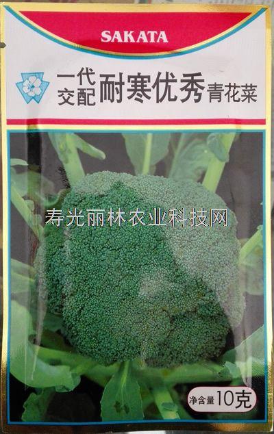 日本坂田耐寒优秀青花菜种子-进口青花菜种子
