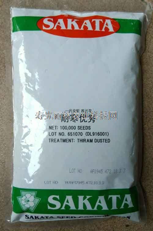 耐寒优秀青花菜种子10万粒大包装约600克