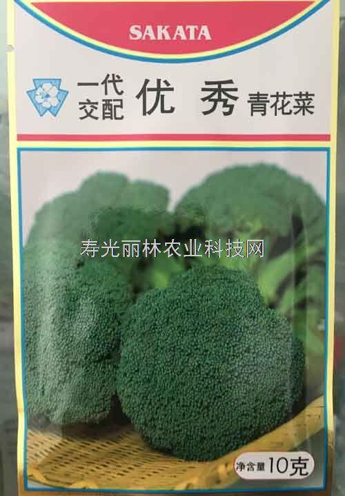 进口青花菜种子-优秀西兰花种子