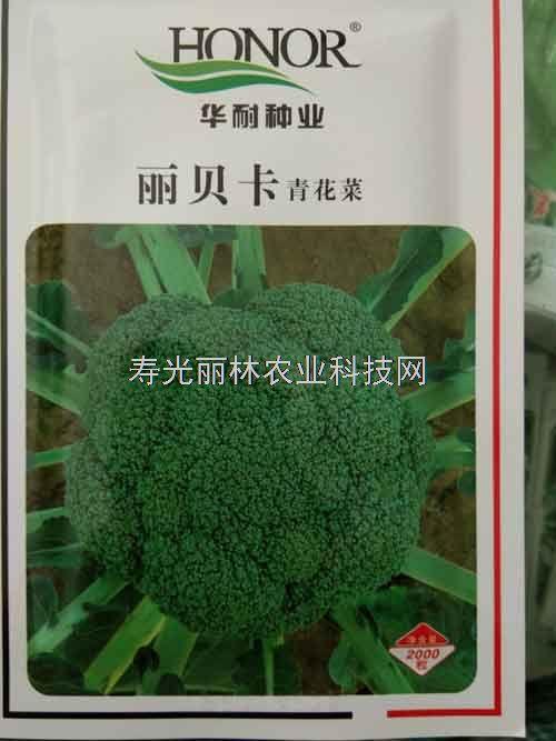 进口青花菜种子-丽贝卡青花菜种子