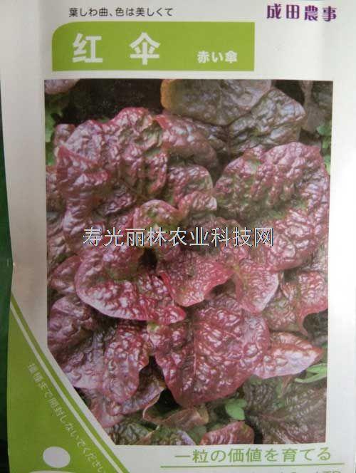 紫叶生菜种子-红伞生菜种子