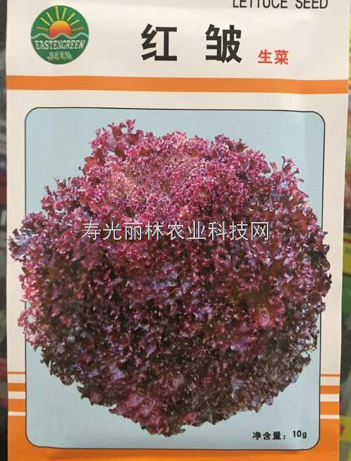 紫叶生菜种子-红皱生菜种子