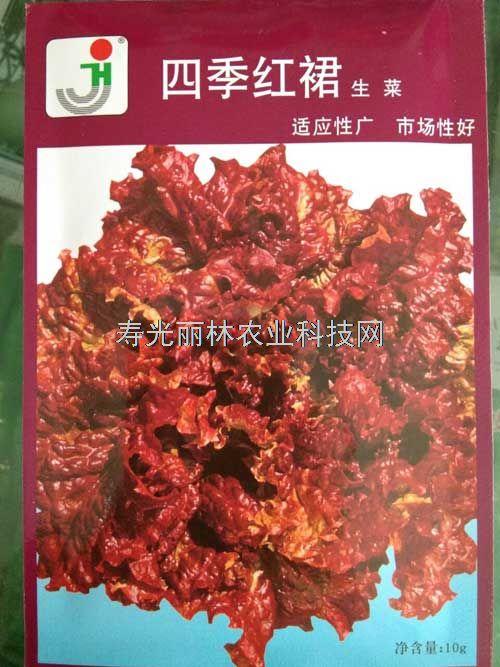 紫生菜种子,四季红裙生菜种子