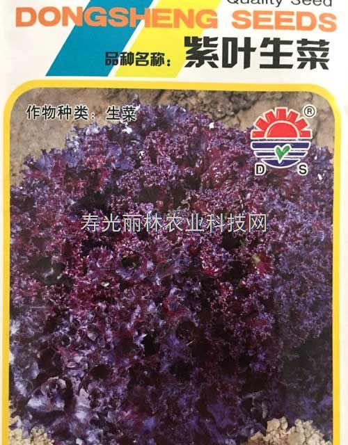 紫生菜种子-紫叶生菜种子