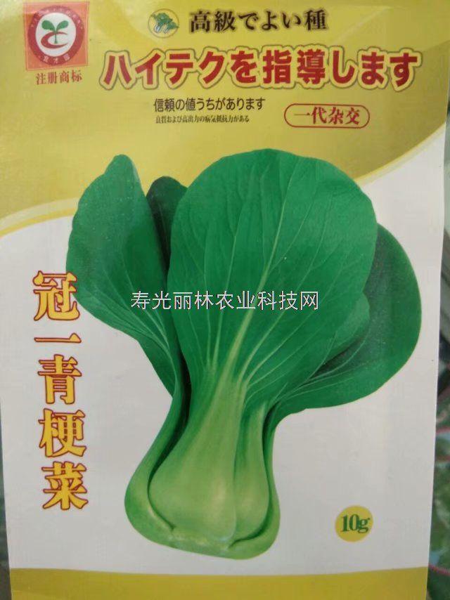 耐热青梗菜种子-耐热油菜种子-冠一油菜种子