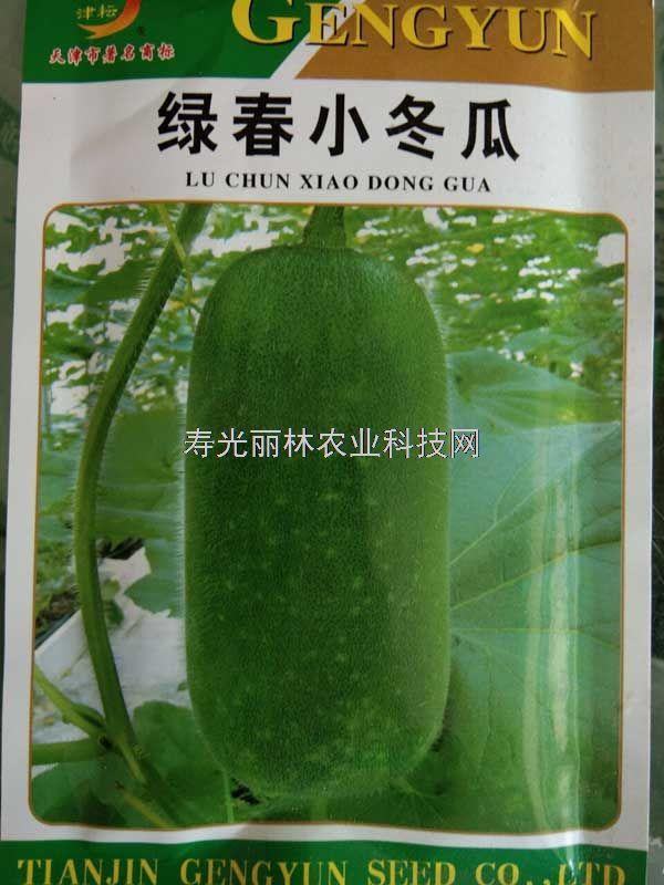绿春小冬瓜种子-绿色小冬瓜种子