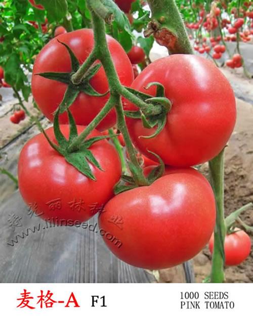耐热粉果番茄种子-麦格-A-抗TY病毒番茄种子