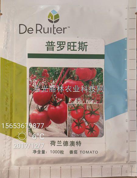 普罗旺斯西红柿种子