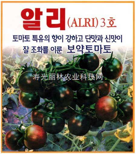 紫番茄种子-阿里三号-黑番茄种子