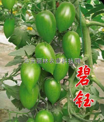 碧钰-绿色口感番茄种子