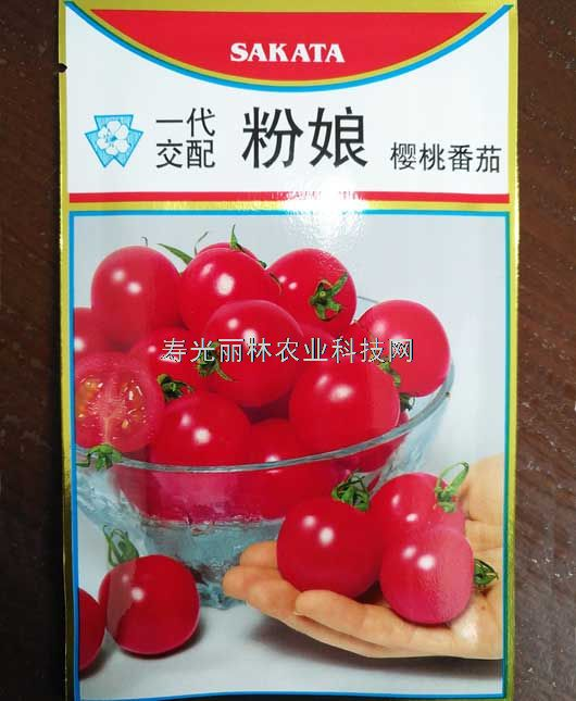 水果番茄种子-粉娘番茄种子-口感小番茄种子