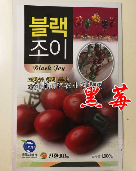 紫色口感小番茄种子-黑莓水果番茄种子