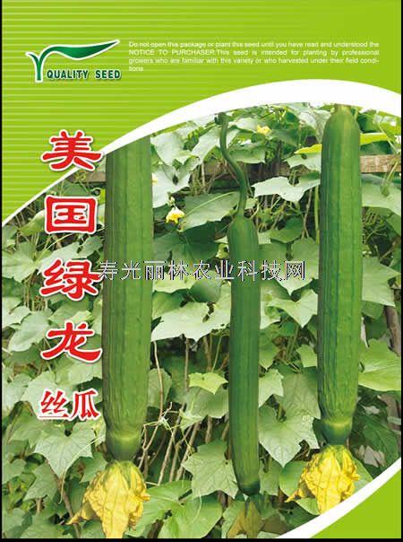 寿光丝瓜种子-美国绿龙-中绿丝瓜种子
