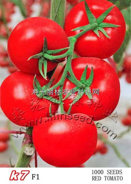 抗病毒大红番茄种子-石头大红番茄种子-K7-进口大红番茄种子