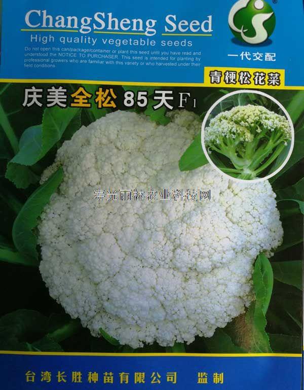 庆美全松85天青梗松花菜种子-进口松花菜种子