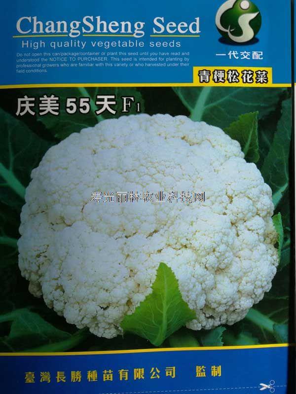 庆美55天青梗松花菜种子