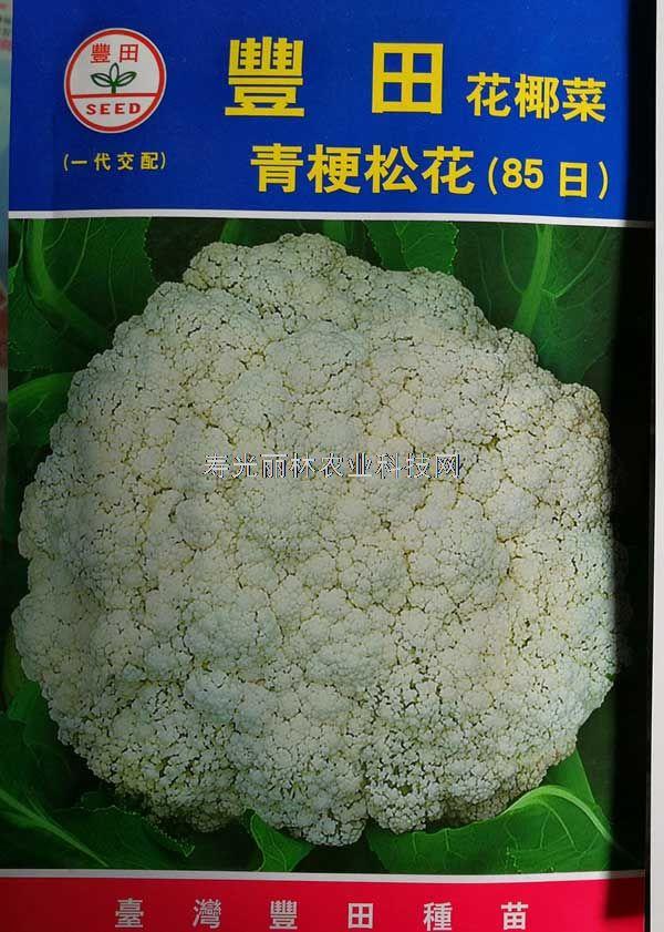 台湾丰田青梗松花85日-台湾进口松花菜种子-丰田85松花菜种子