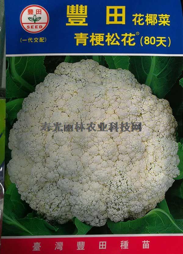 丰田青梗松花菜80天-台湾进口松花菜种子-丰田80松花菜种子