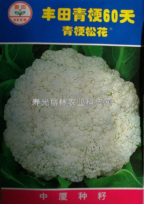 台湾丰田60天青梗松花菜种子