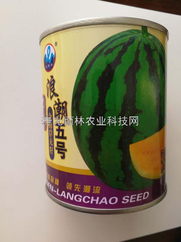 浪潮五号(金海岸无籽)西瓜种子-黄瓤无籽西瓜种子
