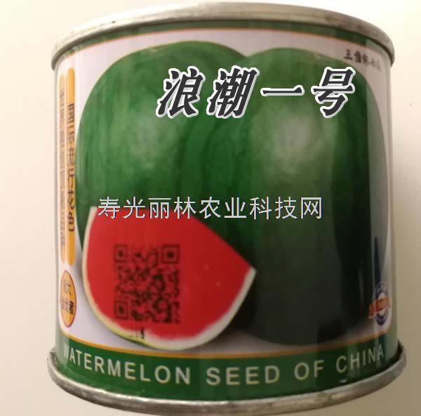 浪潮一号西瓜种子-红瓤无籽西瓜种子-特抗病耐低温