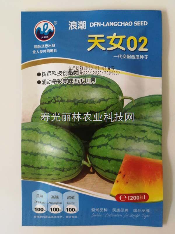 天女02西瓜种子-礼品红玉西瓜、早熟、高糖、红黄肉、耐低温