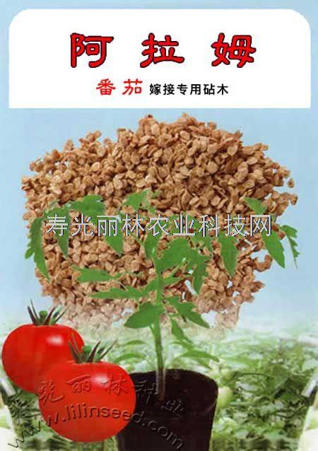 番茄嫁接砧木种子-阿拉姆