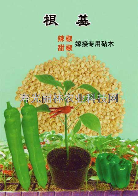 辣椒嫁接砧木种子-甜椒嫁接砧木-根基