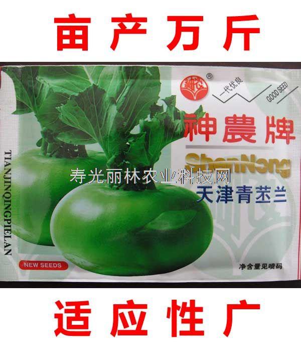 天津青苤蓝种子