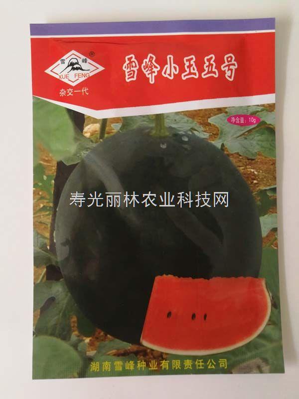 雪峰小玉五号西瓜种子-红瓤超甜-礼品西瓜种子