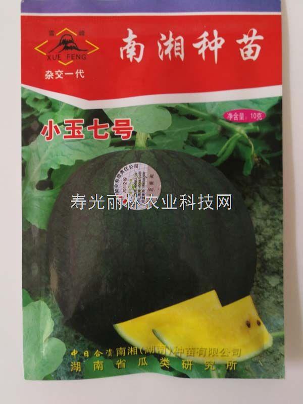 小玉七号西瓜种子-高球形黑皮黄瓤礼品西瓜种子