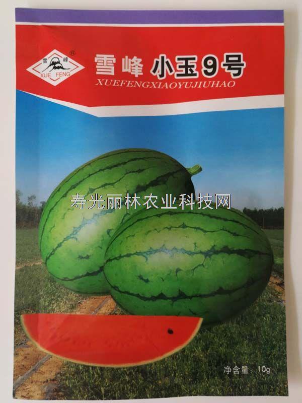 小玉9号西瓜种子-红瓤礼品西瓜种子-早熟高糖耐低温