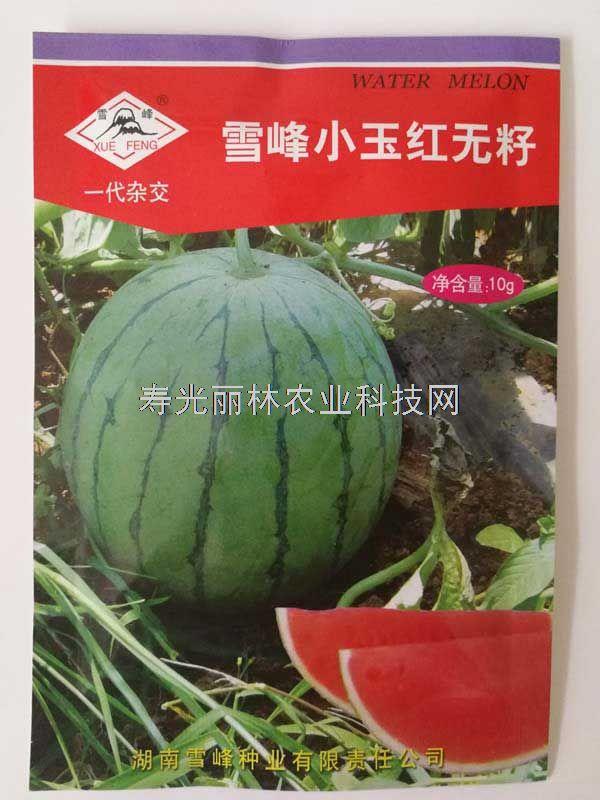 雪峰小玉红无籽西瓜种子-红壤礼品西瓜种子