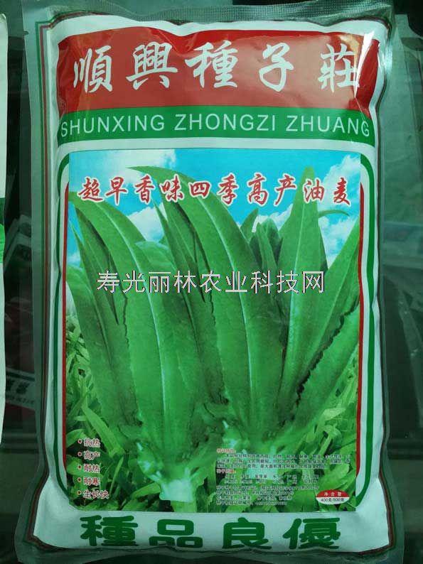 超早香味高产四季油麦菜种子