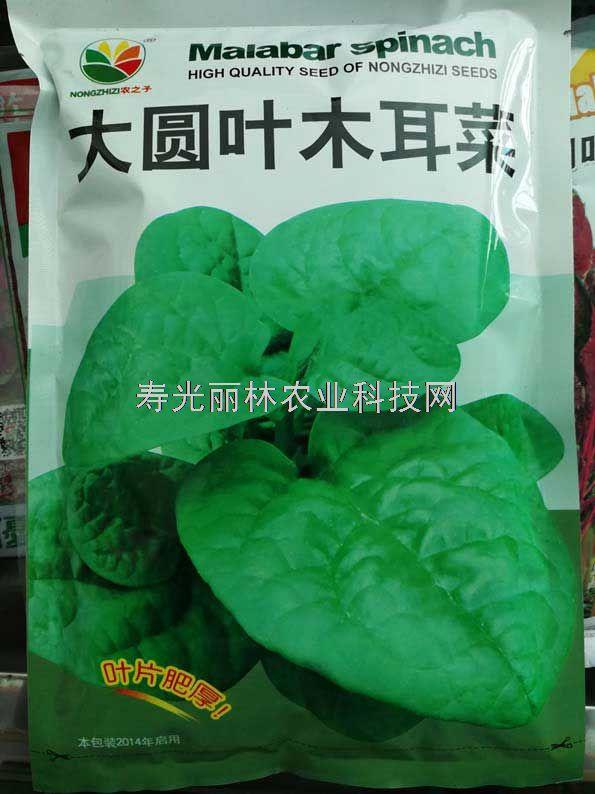 大圆叶木耳菜种子