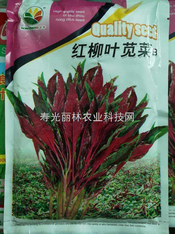柳叶苋菜种子-红柳叶苋菜种子