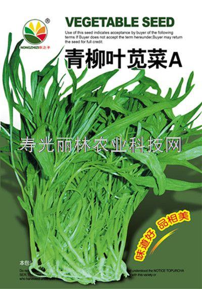 青柳叶苋菜种子-绿尖叶苋菜种子