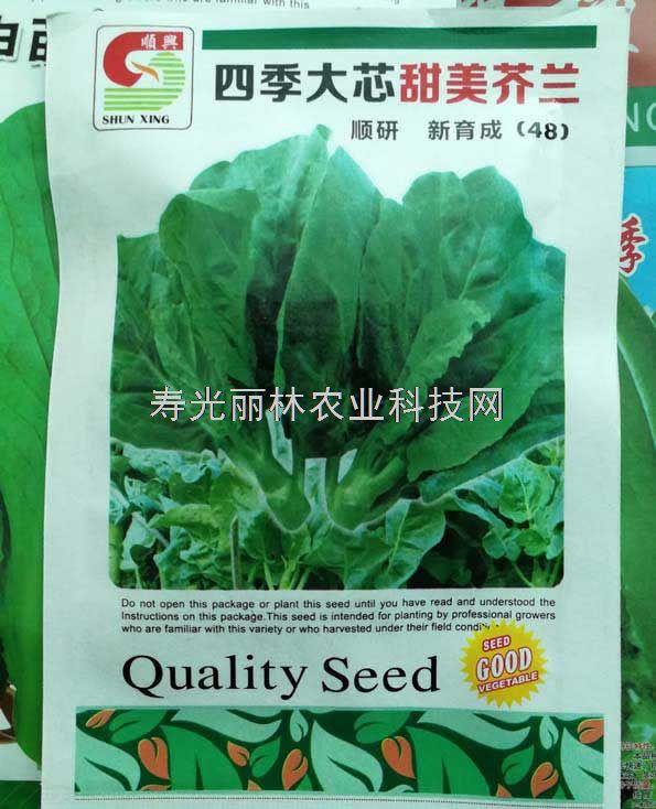 四季大笋甜美芥兰种子