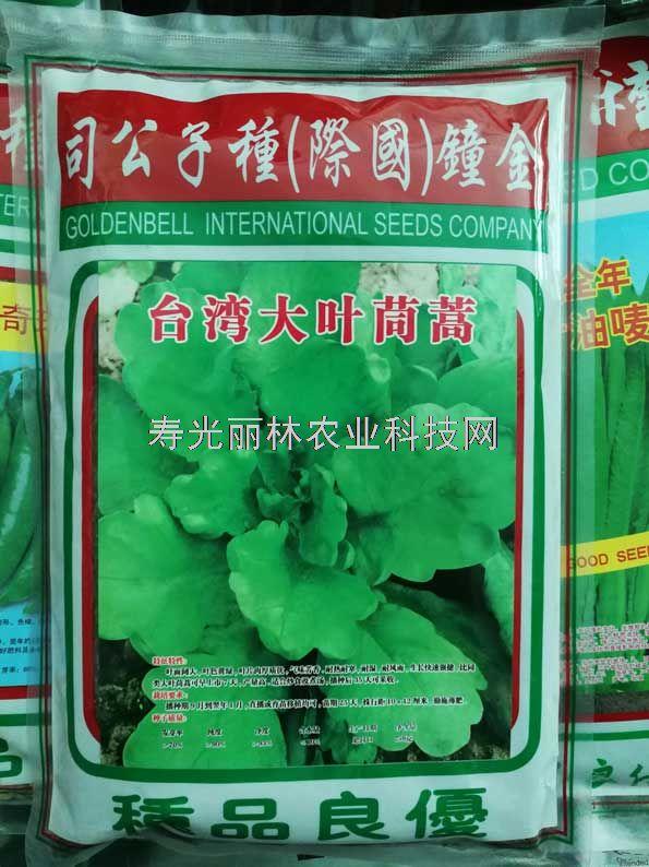 台湾大叶茼蒿种子