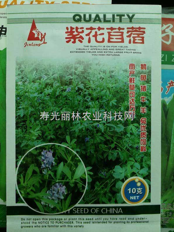 牧草种子-紫花苜蓿种子