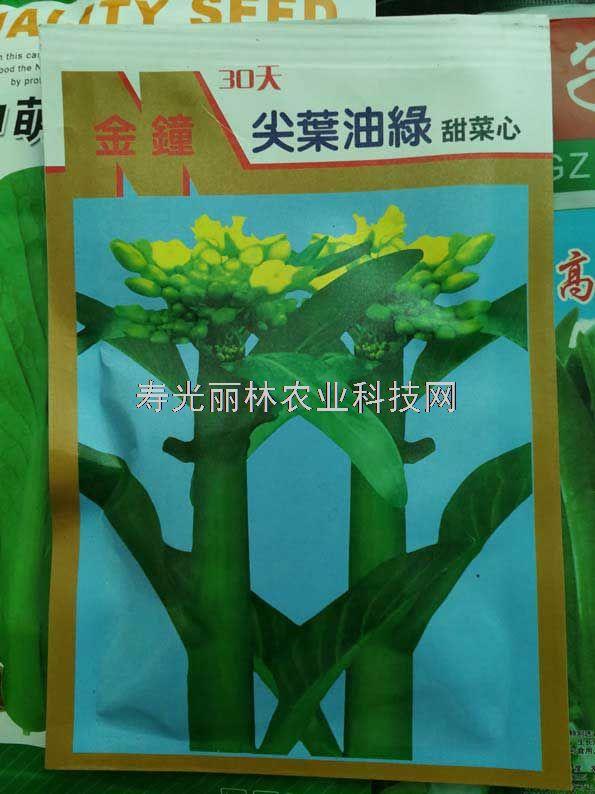 30天尖叶油绿甜菜心种子