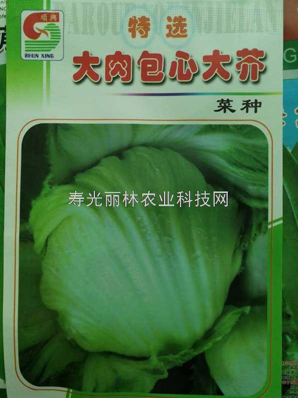 大肉包心芥菜种子