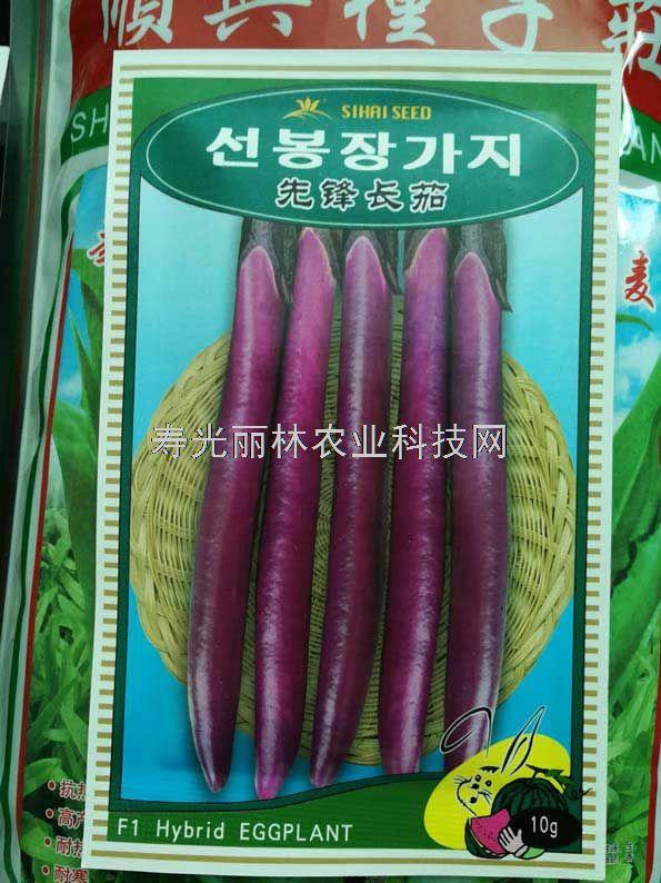 紫红色线茄种子-先锋长茄种子